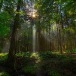 [Peter Balantič] Jutro v gozdu