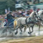 [Stane Gortnar] Lipica_konjske dirke